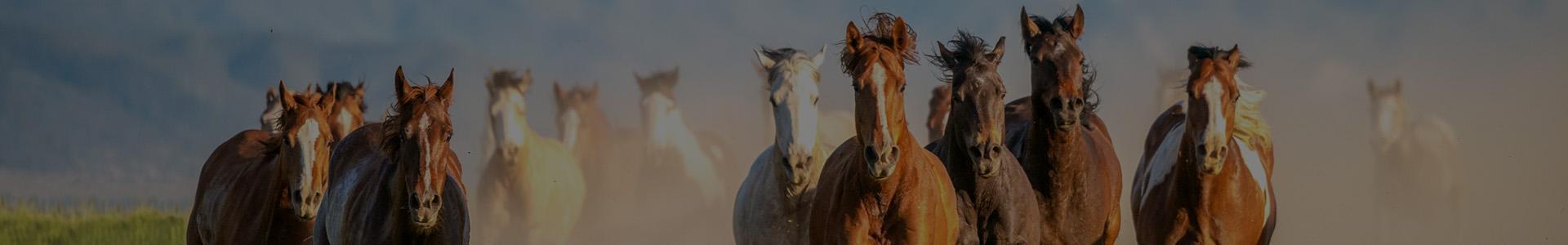 konie w biegu - banner