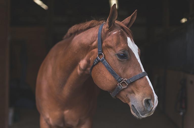 koń zodwróconą głową