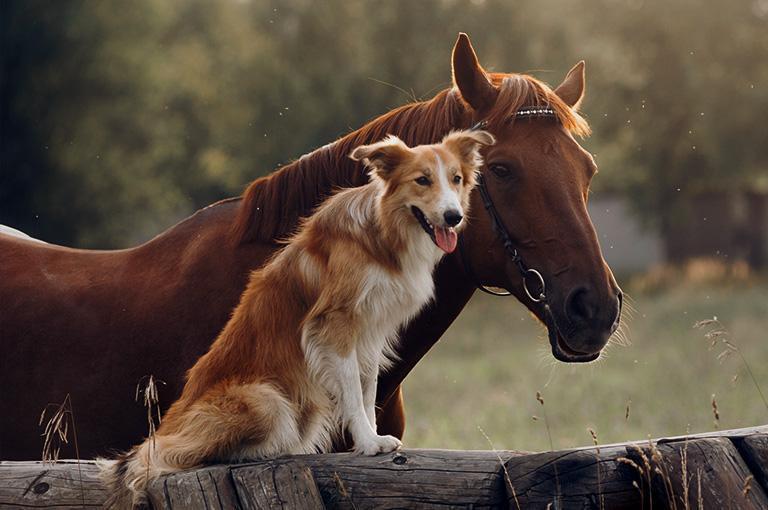 Koń ipies napłocie