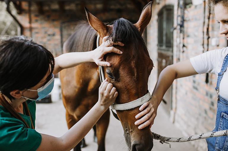 leczenie konia